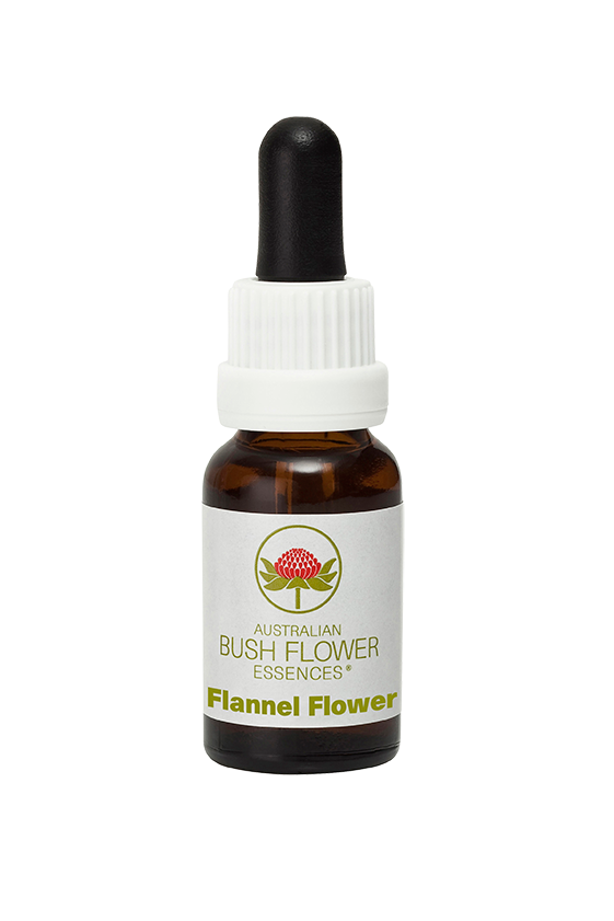 products/Flannel_Flower.png