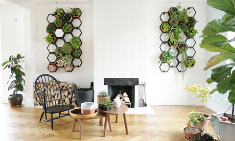 living wall wellbeing