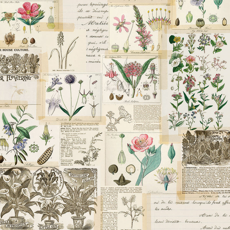 Simple Vintage Botanicals 12x12 Paper - Collect Moments