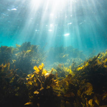 How Important is Seaweed for the Environment?