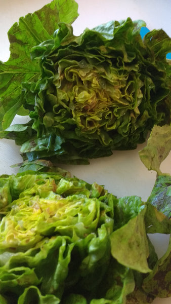 Blog posts Building a great salad -- Part 2: A roadmap for creating your own salads