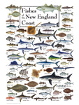 Fishes of New England Coast Puzzle