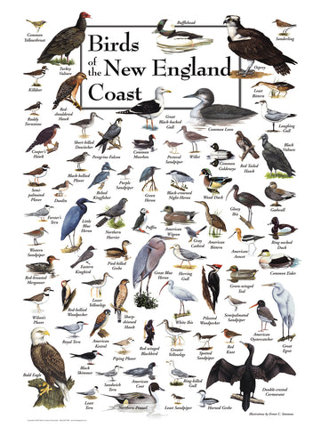 Birds of New England Coast Puzzle