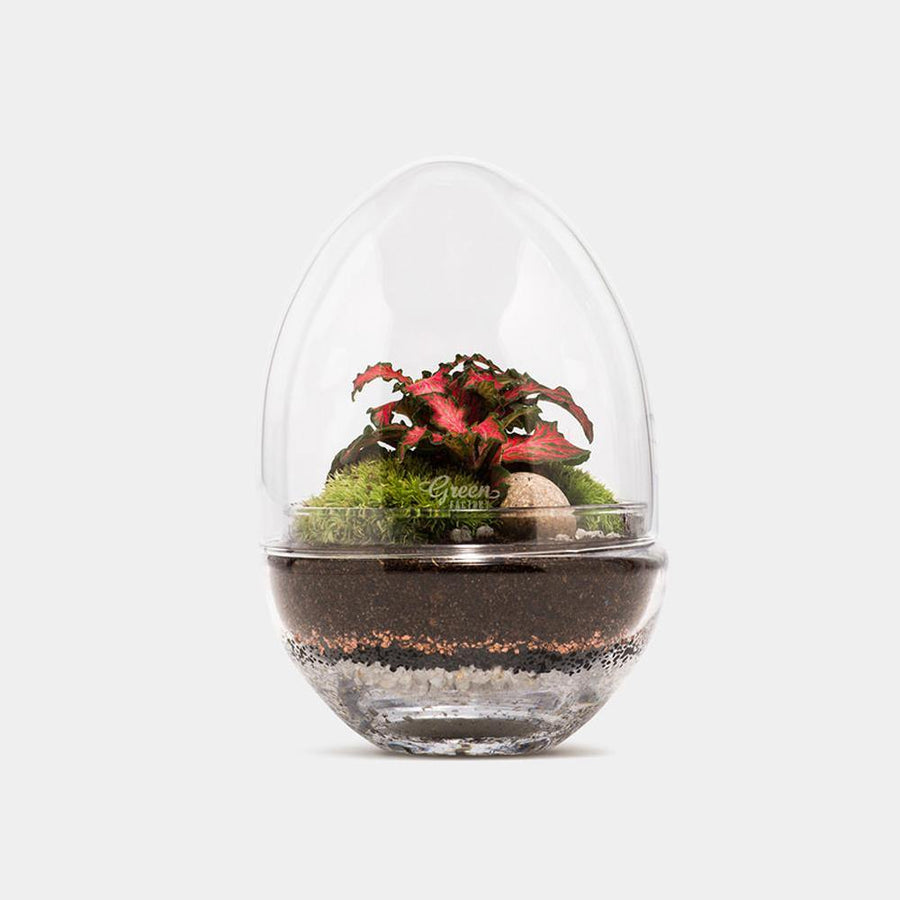 JURASSIC LAB MEDIUM TERRARIUM - COLLECTION ONLY - JAVELIN