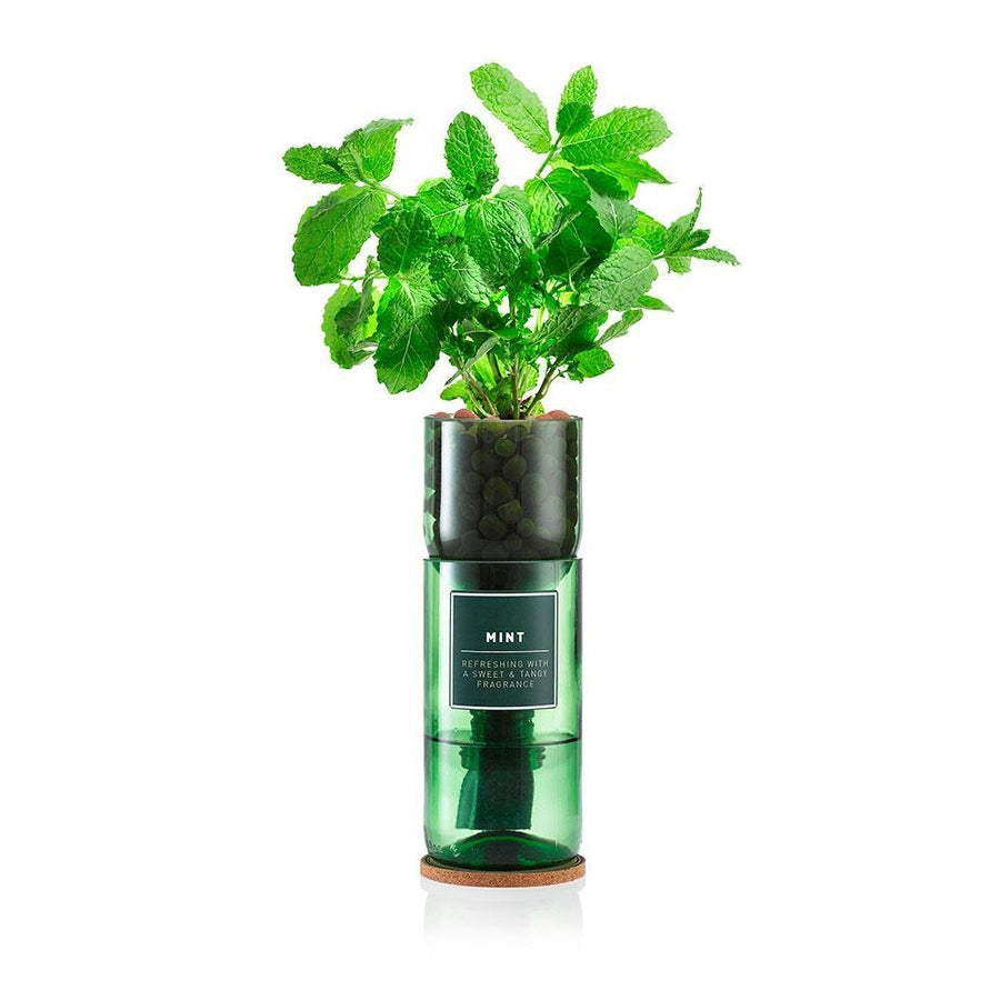 hydro-herb mint