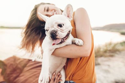 The Benefits of CBD for Your Dog