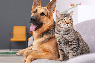 Topical CBD Pet Products for Your Cat and Dog