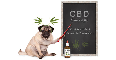 Interesting Things About CBD You May Not Know