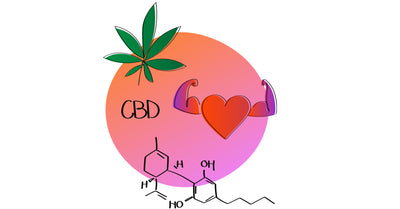 CBD Beneficial In Keeping Hearts Healthy