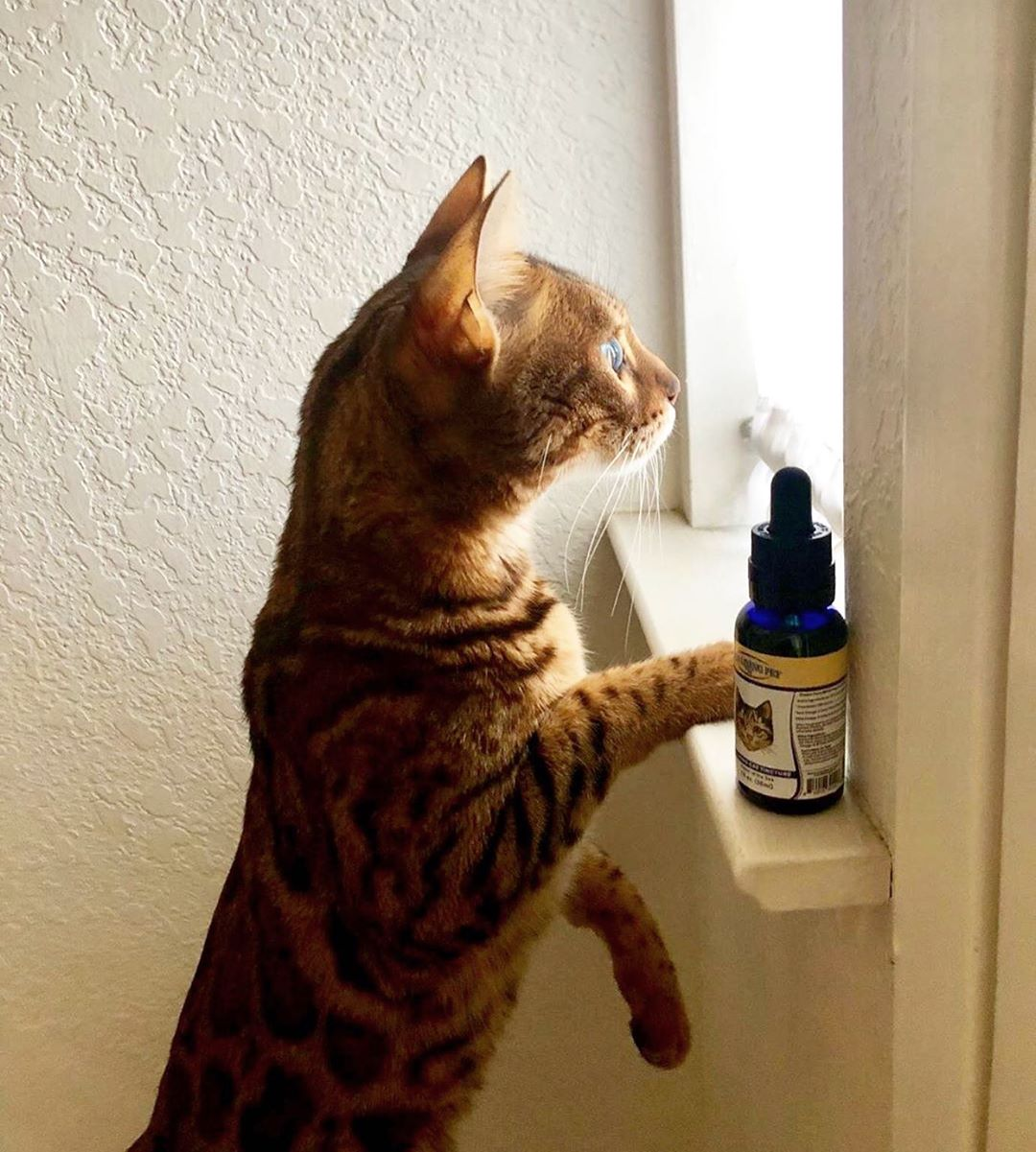CBD Cat Products