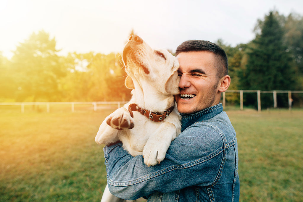 The Top Reasons to Use CBD for Pets