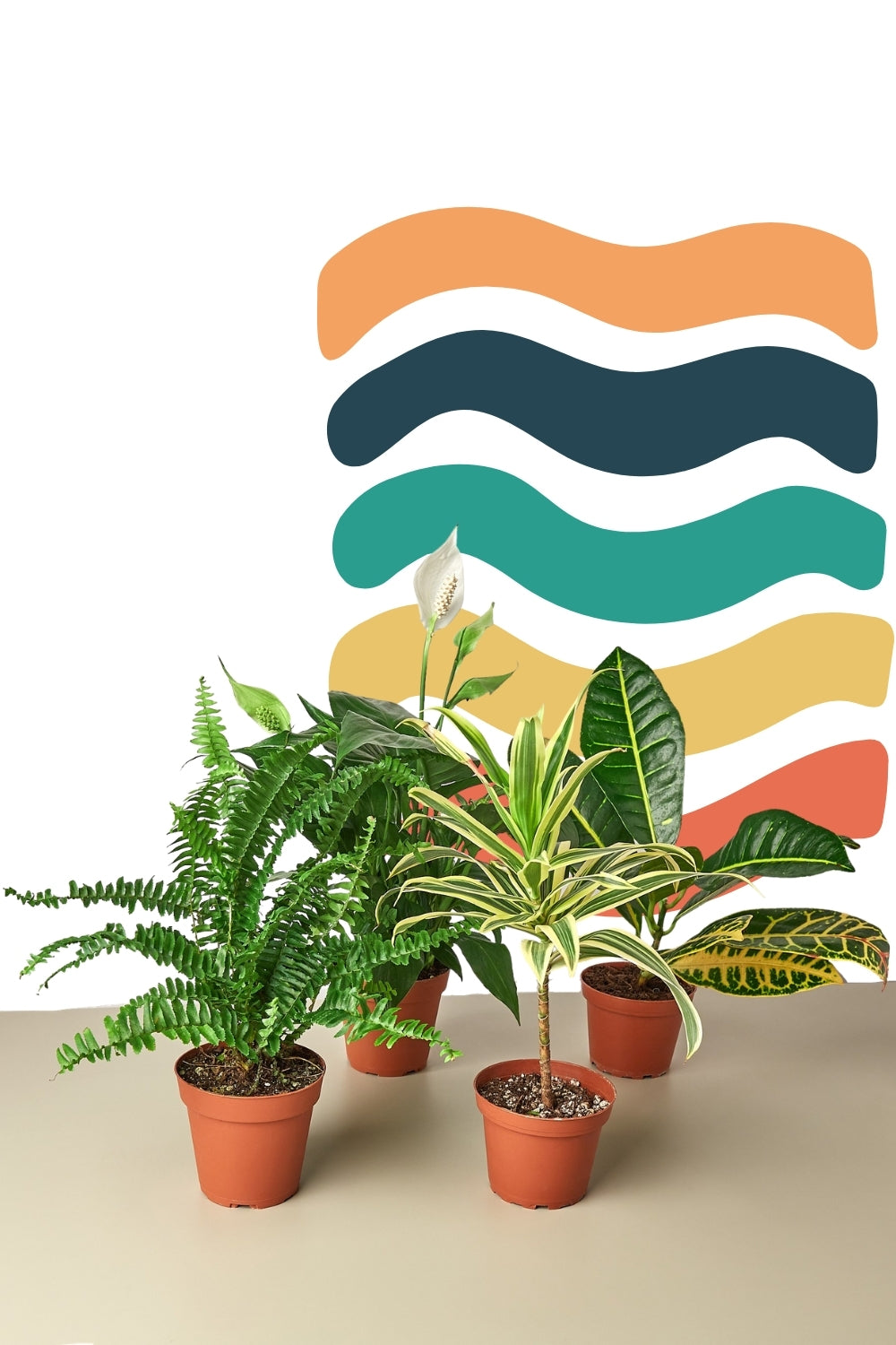 bundle of houseplants, buy houseplants bulk