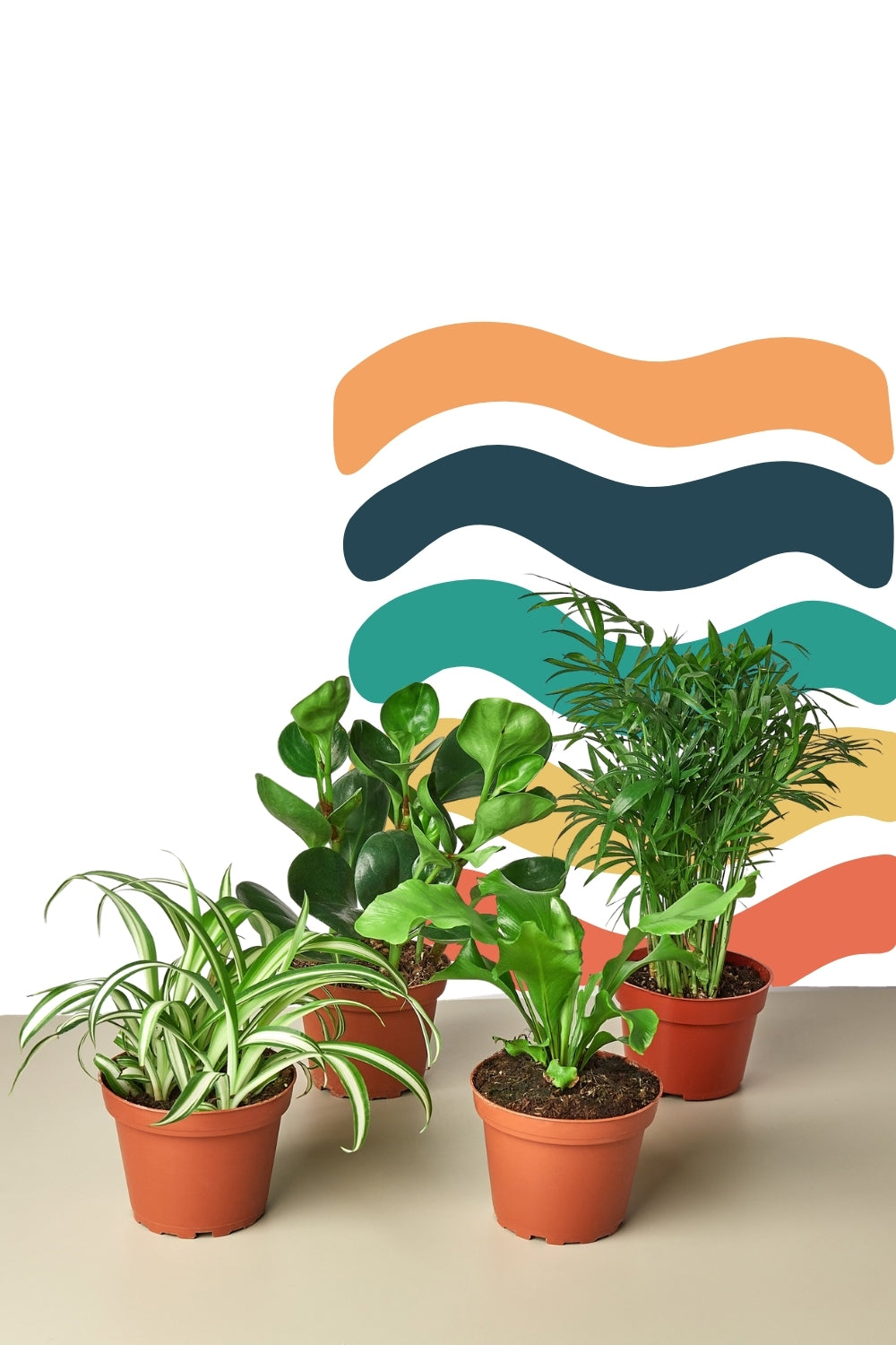 Pet Friendly Plants bundles, pet safe plants, bulk houseplants, best pet safe indoor plants