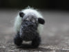 Pure wool mini Irish Sheep