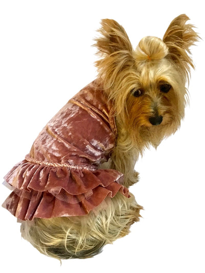 Crushing on YOU Metallic Velvet Dog Dress, Rosewater