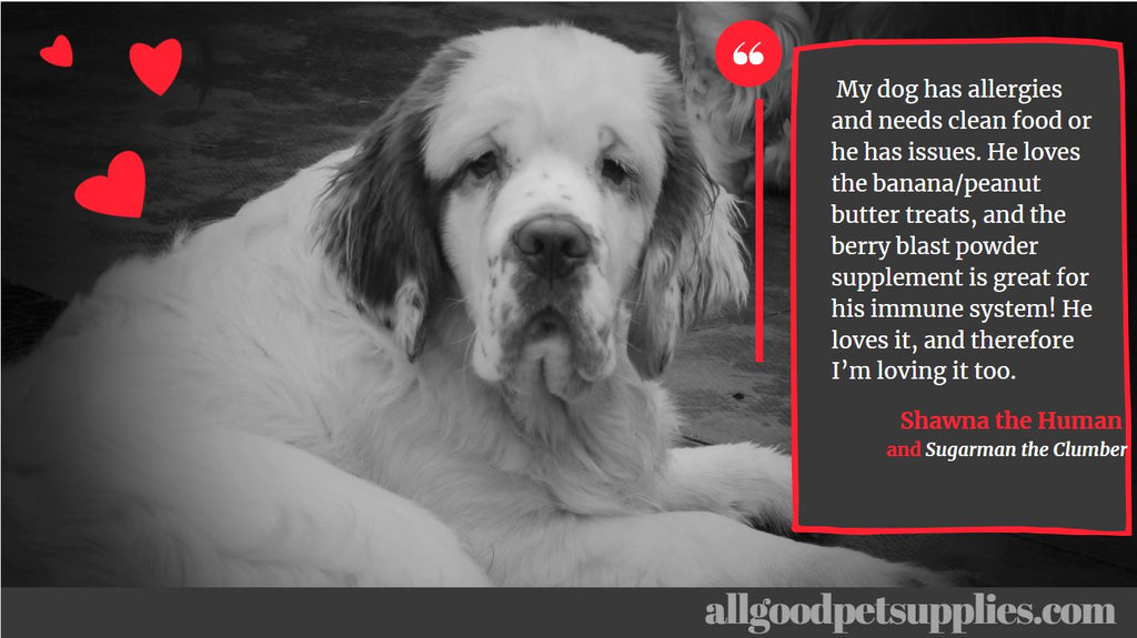 Superfoods for Dogs testimonial with photo of Clumber Spaniel