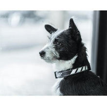 Load image into Gallery viewer, Dog Collar. Dog wearing Black dog collar with white trim. Street wear for dogs by Fresh Pawz.