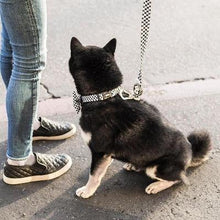 Load image into Gallery viewer, Checkerboard style collar to go with the Checkerboard dog leash. Available at allgoodpetsupplies.com