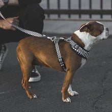 Load image into Gallery viewer, Checkerboard style leash for dogs, available through allgoodpetsupplies.com