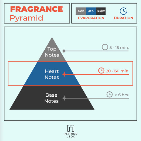 Fragrance pyramid middle notes