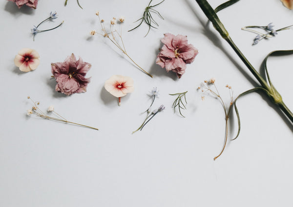 Flowers and herbs on a white background