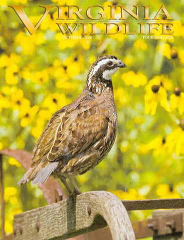 Virginia Wildlife - Print Magazine
