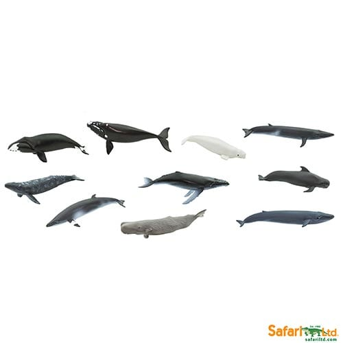 Safari Ltd Whales Toob 100072