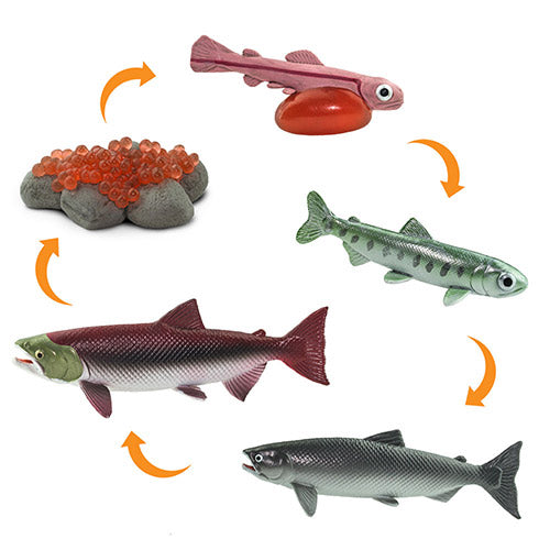 Safari Ltd - Life Cycle of a Salmon (Life Cycle Series)