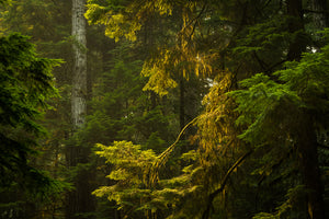 Forest - Mike Crane Photography