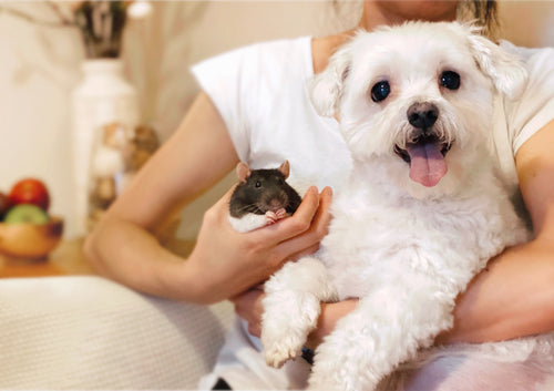 Pipco Pets About Us - Coco the dog and Pip the rat on the couch