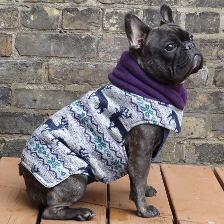 french bulldog jacket french bulldog and pug winter coats babies beasts 6714
