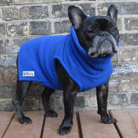 Boys Turtleneck - Royal Blue - French Bulldog Pug Fleece Sweater