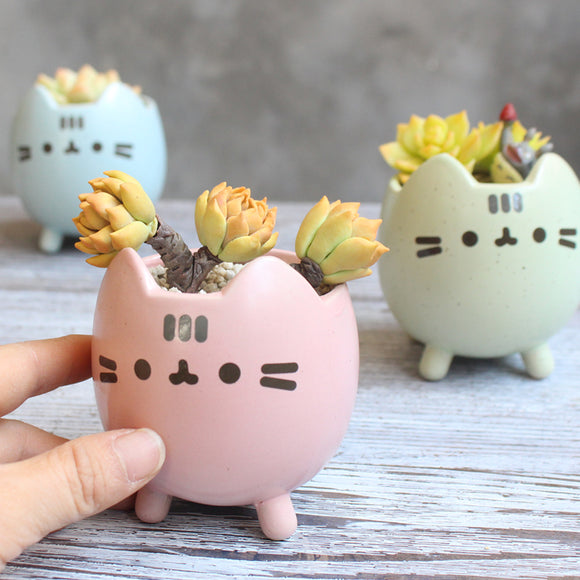 Adorable Succulent Pots