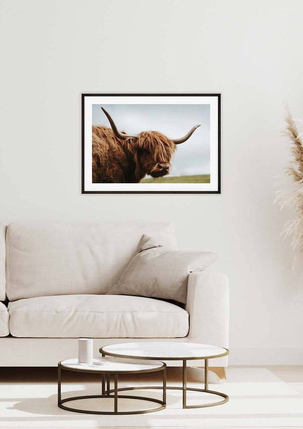 Highland Cattle Looking Landscape