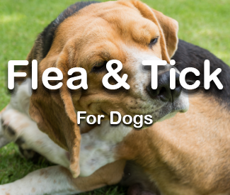 Dog Flea & Tick Control
