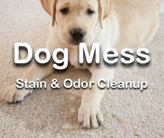 Dog Stain & Odor Removal