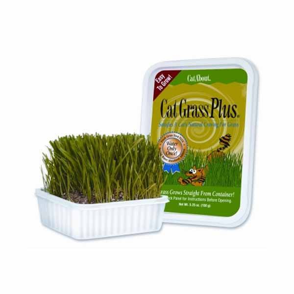 Gimborn - Cat Grass Plus Tub