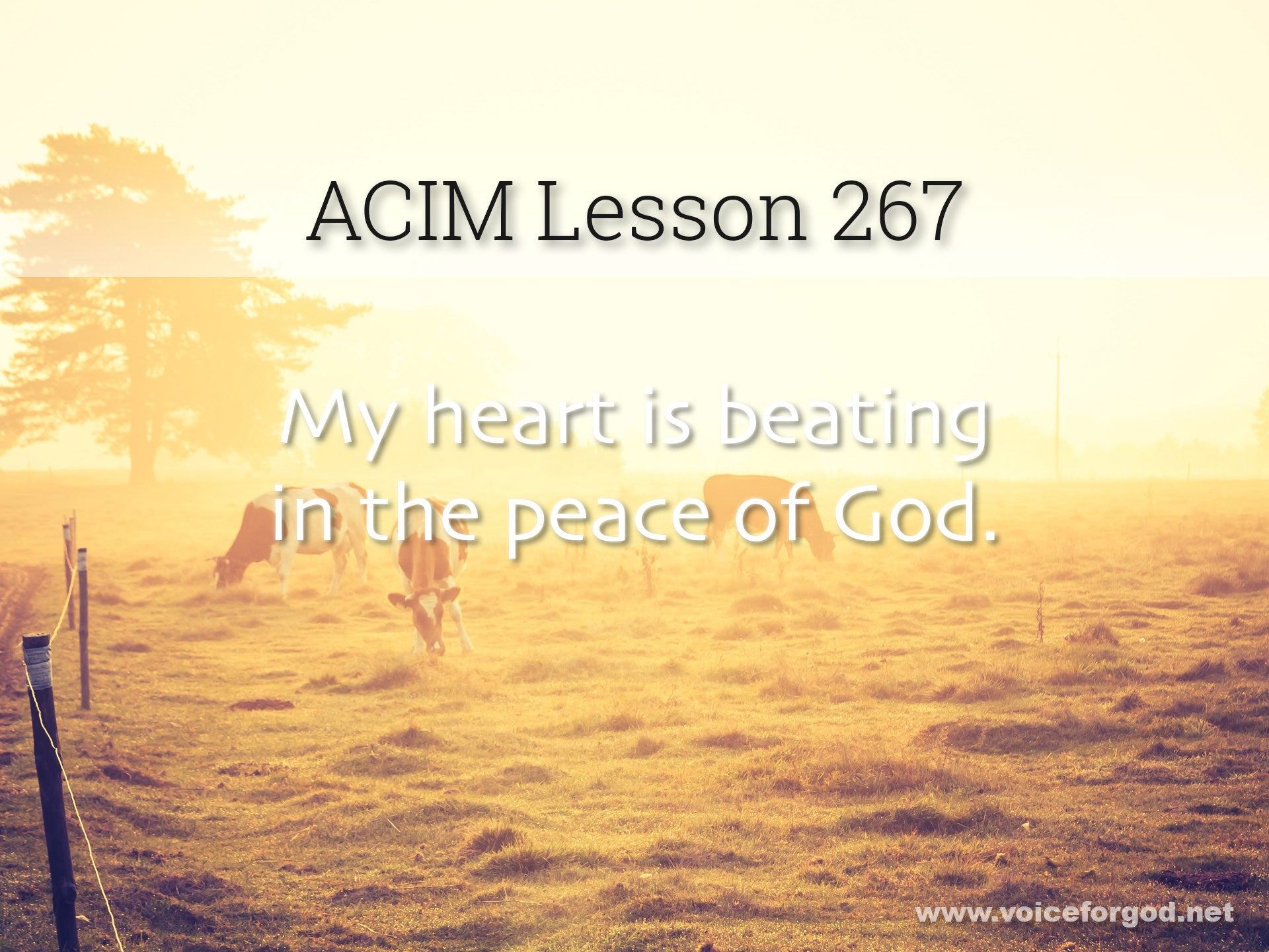 ACIM Lesson 267 - A Course in Miracles Workbook Lesson 267