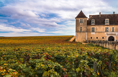 TIPTOEING INTO BURGUNDY with BOURGOGNE ROUGE