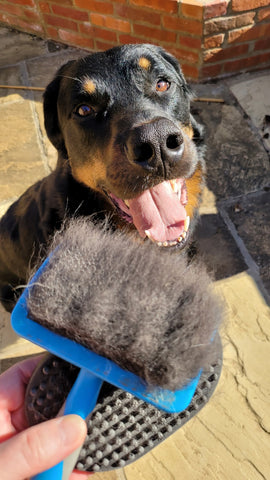 Dog grooming brush full of fur with happy dog