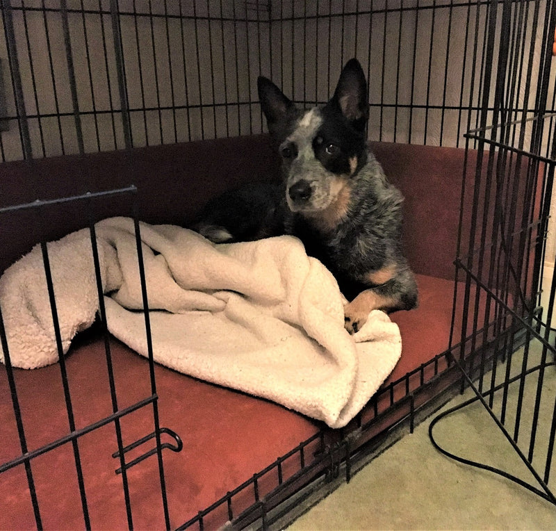 Dog Beds for Crates - Big Dog Bed Company