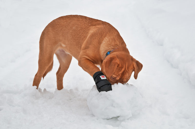 Dog paw protection shoes useful in snow, for injuries and arthritis