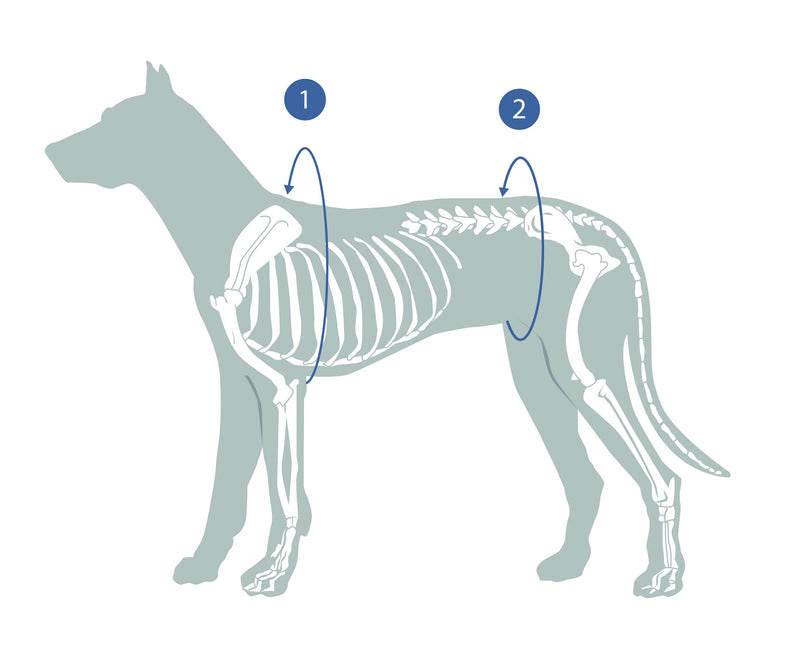 Guide to measurement of your dog for a full medical protection cover