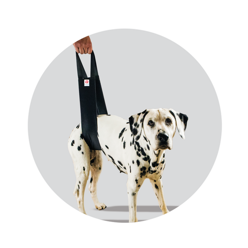 Helping Hand Standard Sling demonstrated on a Dalmatian Dog
