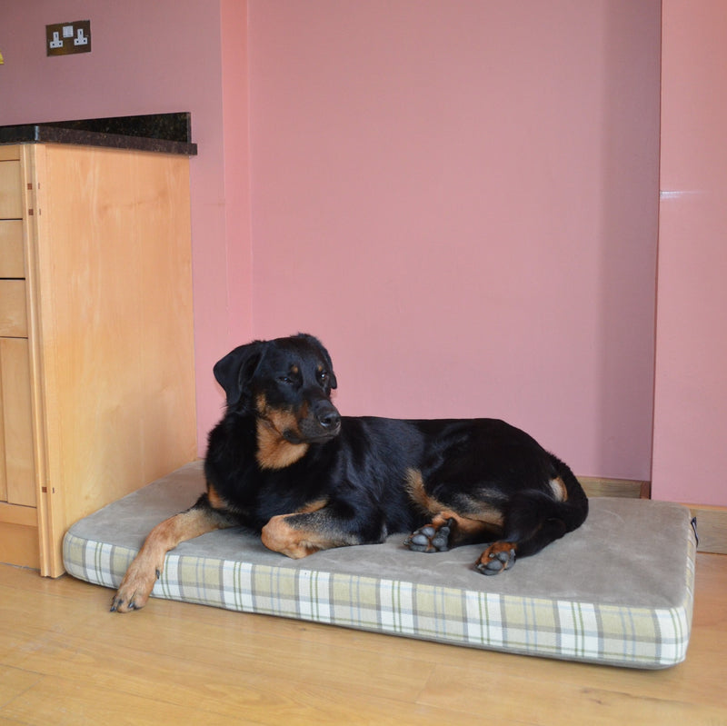 A dog lying on a bed designed to fit neatly alongside kitchen units- Big Dog Bed Company