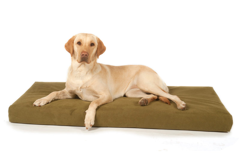 Labrador lying on a Signature foam and memory foam dog beds from Big Dog Bed Company
