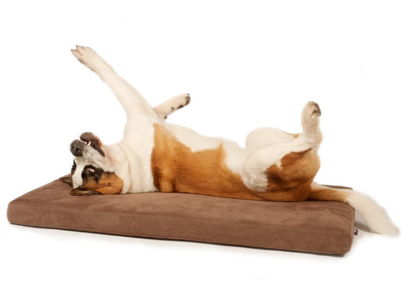 St Bernard dog with his legs in the air on a Signature foam and memory foam dog bed from Big Dog Bed Company