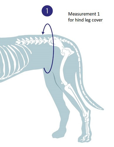 Measurement guide for hind leg bandage cover for dogs