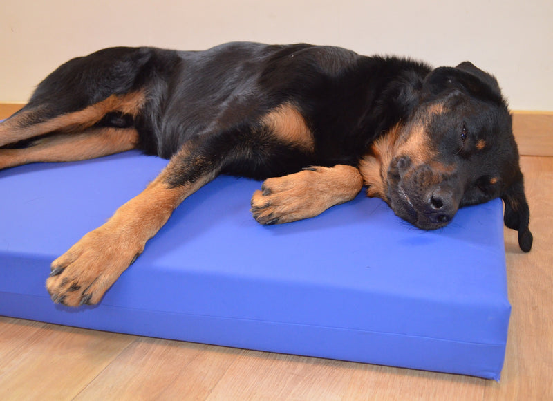 Incontinence Beds for Dogs - Big Dog Bed Company