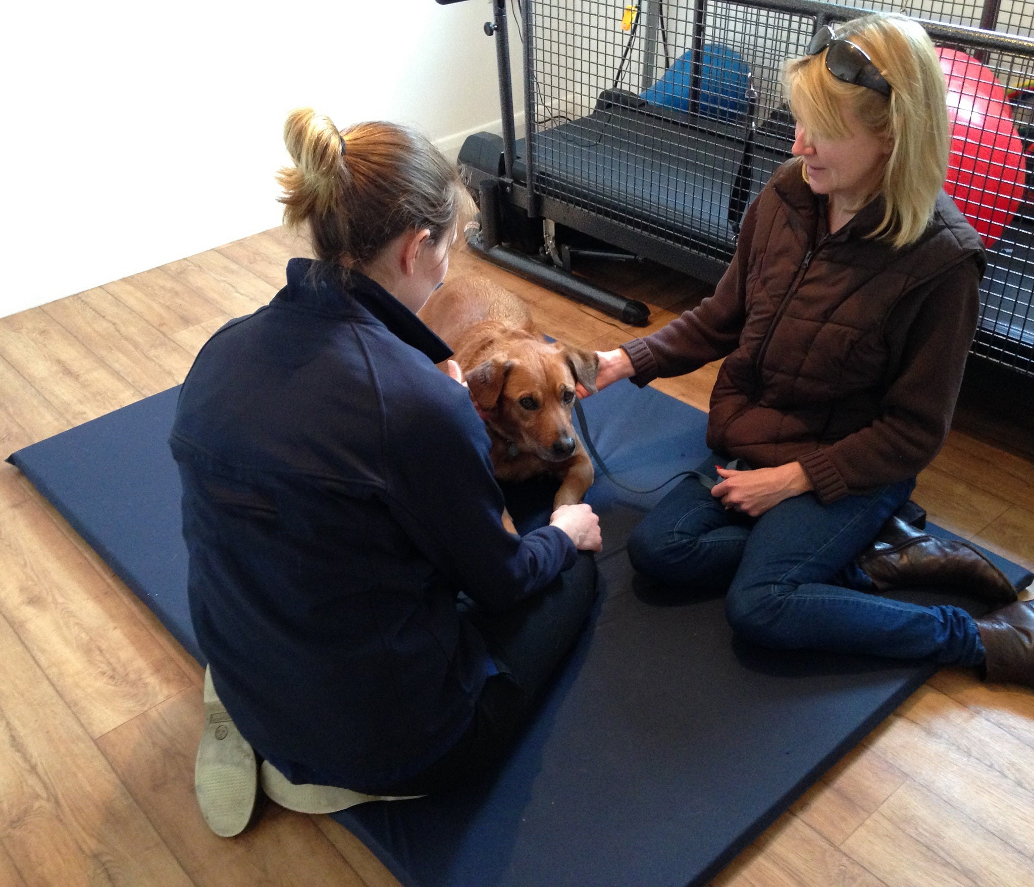Floor mat for canine physiotherapy